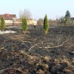 Interwencja pożar trawy regulska zd6
